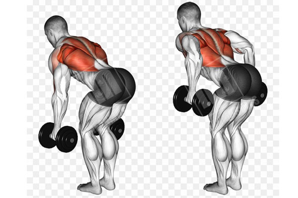 Bent Over Two Dumbbell Row
